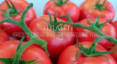 Планти представляет ранний розовый томат